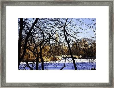 Through The Branches 3 - Central Park - Nyc Framed Print by Madeline Ellis