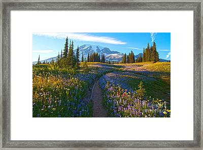 Through The Golden Meadows Framed Print by Mike Reid