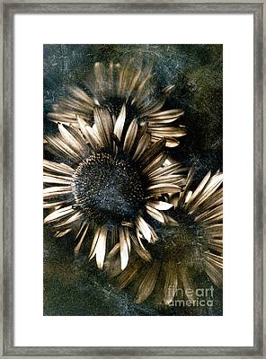 Through The Looking Glass Framed Print by Venetta Archer