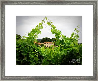 Through The Vines Framed Print by Lainie Wrightson