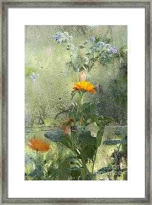 Through The Window  Framed Print by Tim Gainey
