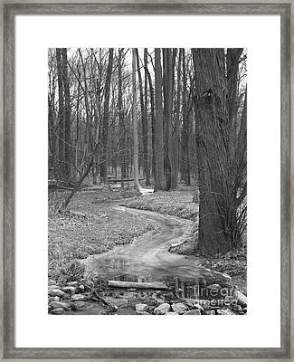 Through The Woods Framed Print by Sara  Raber