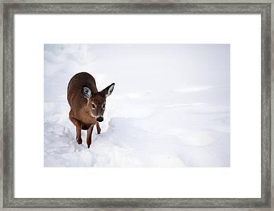 Thru The Snow Framed Print by Karol Livote
