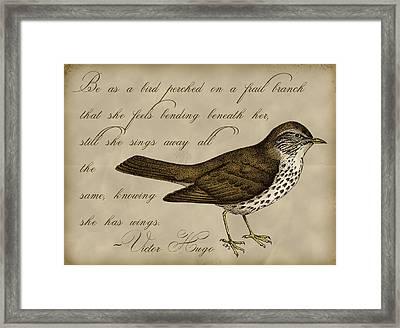 Thrush Bird Wall Art Framed Print by Christy Beckwith