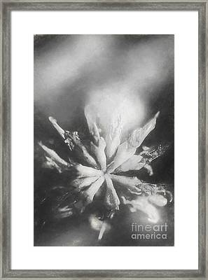 Thy Art In Dying Framed Print by Jorgo Photography - Wall Art Gallery