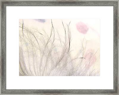 Tickles Framed Print by John  Poon