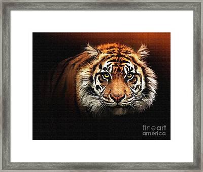 Tiger Bright Framed Print by Robert Foster