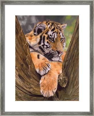 Tiger Cub Painting Framed Print by David Stribbling
