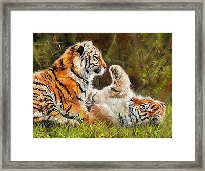 Tiger Cubs Playing Framed Print by David Stribbling