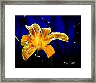 Tiger Lily On Waters Edge Framed Print by Bob Orsillo
