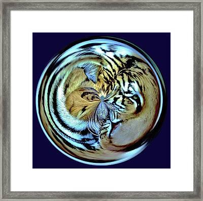 Tiger Orb Framed Print by Paulette Thomas