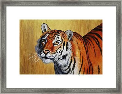 Tiger Portrait Framed Print by Crista Forest