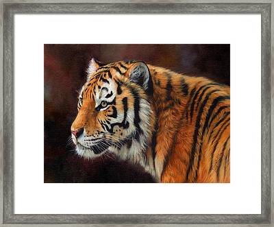 Tiger Portrait  Framed Print by David Stribbling