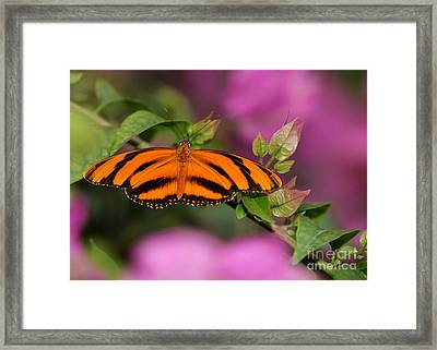 Tiger Stripe Butterfly Framed Print by Sabrina L Ryan