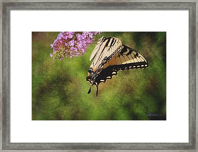 Tiger Swallowtail-featured In Photography And Textures And Harmony-happiness Groups Framed Print by EricaMaxine  Price