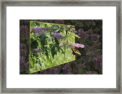 Tiger Swallowtail Oob-featured In Beautycaptured-oof-harmony And Happiness Framed Print by EricaMaxine  Price