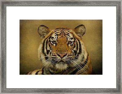 Tiger Tiger Framed Print by Sandy Keeton