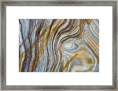 Tigers Eye Framed Print by Tim Gainey