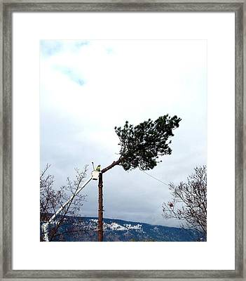 Timber Framed Print by Will Borden