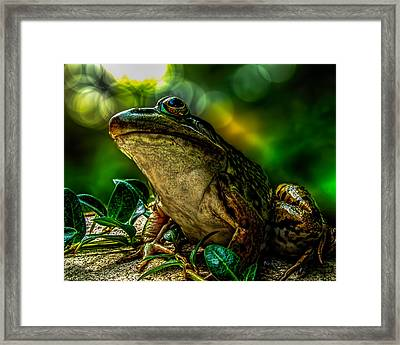 Time Spent With The Frog Framed Print by Bob Orsillo