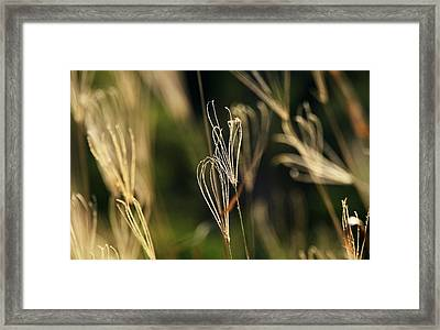Time Stands Still Framed Print by Debbie Howden
