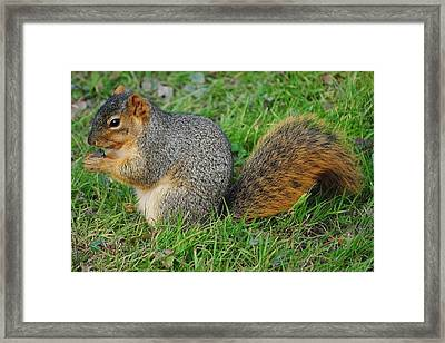 Time To Feast Framed Print by Frozen in Time Fine Art Photography