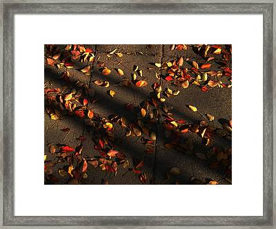 Timeless Framed Print by Lucy D