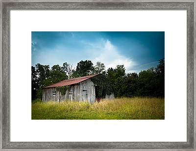 Tin Roof...ivy Covered Barn Framed Print by Shane Holsclaw
