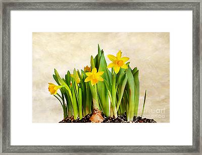 Tiny Dancers Framed Print by Darren Fisher
