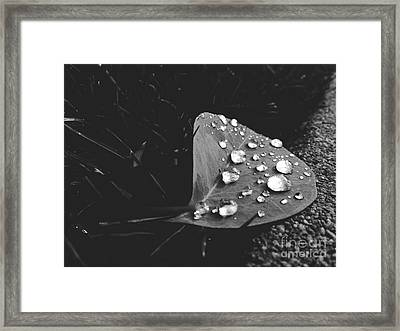 Tiny Jewels Framed Print by Lynsie Petig
