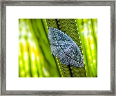 Tiny Moth On A Blade Of Grass Framed Print by Bob Orsillo