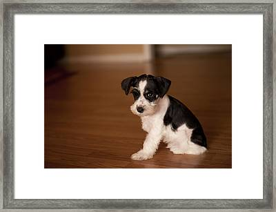 Tiny Puppy Framed Print by Malania Hammer