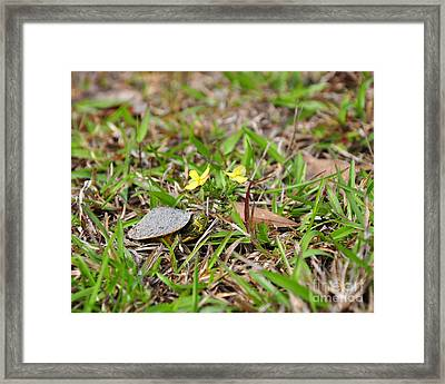 Tiny Turtle Framed Print by Al Powell Photography USA