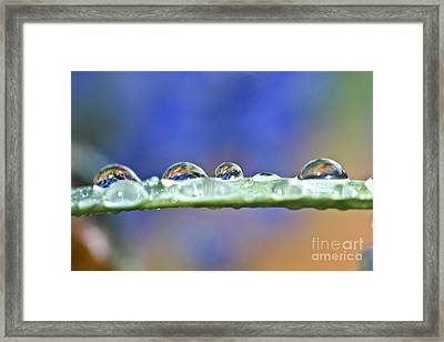 Tiny Waterworld And A Leaf Framed Print by Heiko Koehrer-Wagner