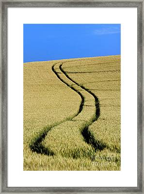 Tire Tracks In A Wheat Field. Auvergne. France. Framed Print by Bernard Jaubert