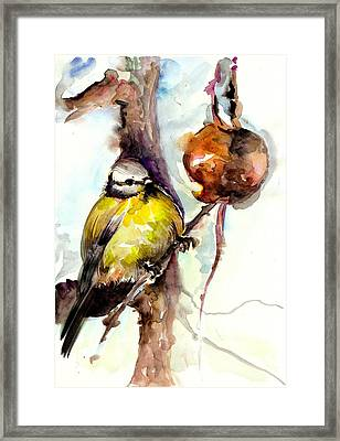 Titmouse Eating The Apple - Original Watercolor Framed Print by Tiberiu Soos