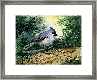 Titmouse Framed Print by Virginia Potter