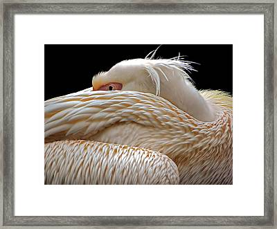 To Be Half Asleep... Framed Print by Thierry Dufour