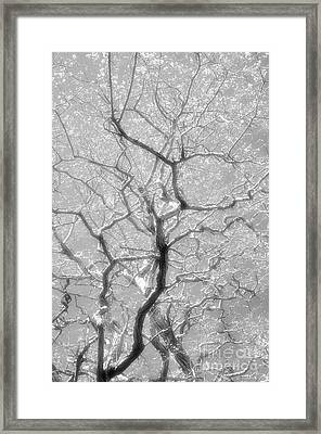 To Be Or Not To Be Framed Print by Newel Hunter