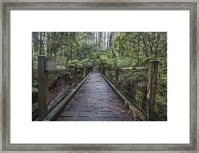 To The Other Side Framed Print by Shari Mattox