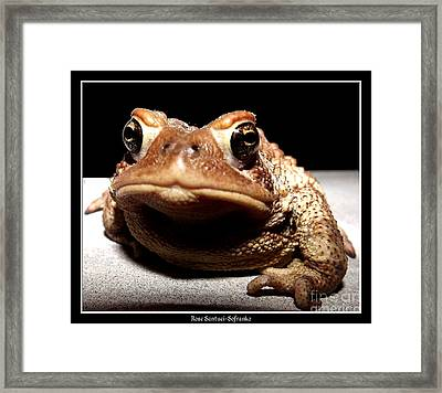 Toad Thinking What Do You Want Framed Print by Rose Santuci-Sofranko