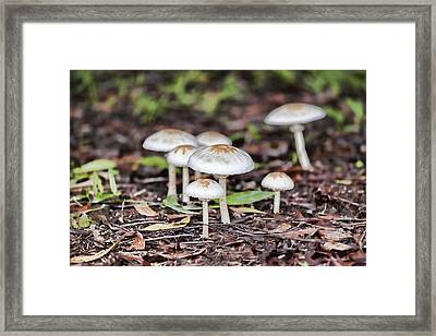Toadstools V8 Framed Print by Douglas Barnard