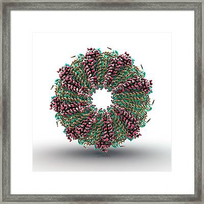 Tobacco Mosaic Virus Proteins Framed Print by Animate4.com/science Photo Libary