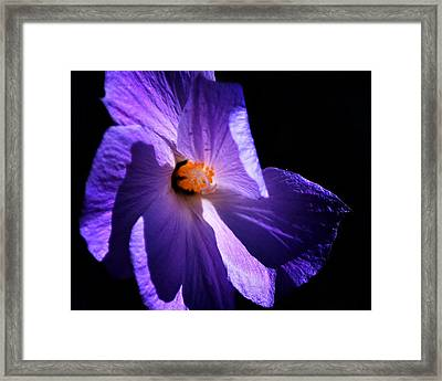 Todays'  Blessing Framed Print by Camille Lopez