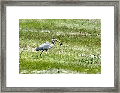 Today's Catch Framed Print by Mike Dawson