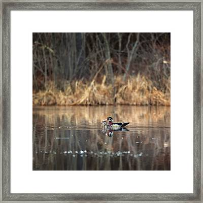Together In The Swamp Square Framed Print by Bill Wakeley