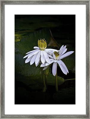 Togetherness Framed Print by Holly Kempe