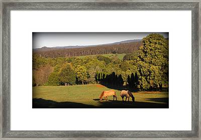 Togetherness Horse Framed Print by Henry Adams