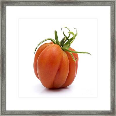 Tomato Framed Print by Bernard Jaubert