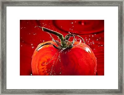 Tomato Freshsplash 2 Framed Print by Steve Gadomski
